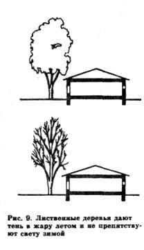 Деревья на участке
